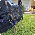 Adopt A Pet :: Toby (Tripod)