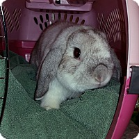 Adopt A Pet :: Cyrus - North Gower, ON