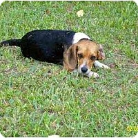Adopt A Pet :: Teal - Lincolndale, NY