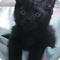 Adopt A Pet :: Sully - Richmond, VA