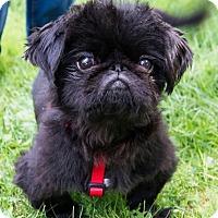 Adopt A Pet :: Bijoux - Portland, ME
