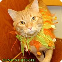 Adopt A Pet :: Sunkist - Tiffin, OH