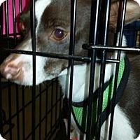 Adopt A Pet :: Leta - Pembroke, GA