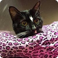Adopt A Pet :: Bree - Wayne, NJ