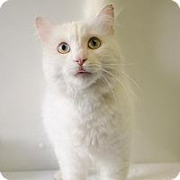 Adopt A Pet :: VIXEN - Sandusky, OH