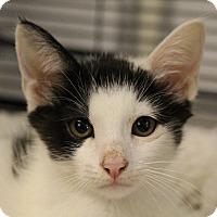 Adopt A Pet :: Tyrese - Sarasota, FL