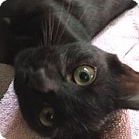 Adopt A Pet :: Ruthie - Columbia, SC