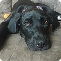 Adopt A Pet :: Kaylee - Austin, TX