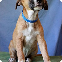Adopt A Pet :: Franklin - Waldorf, MD