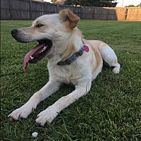 Adopt A Pet :: Sunny - Parkton, NC