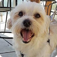 Adopt A Pet :: Charlie - Pasadena, CA