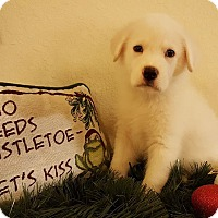 Labrador Retriever Mix Puppy for adoption in Fort Atkinson, Wisconsin - QUINCY