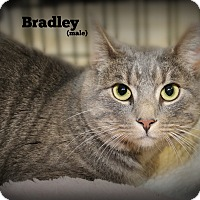 Adopt A Pet :: Bradley - Springfield, PA