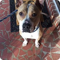Adopt A Pet :: Morgan - Suwanee, GA