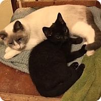 Adopt A Pet :: Arthur - Delmont, PA