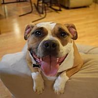 Adopt A Pet :: Dori - White Settlement, TX