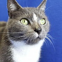 Adopt A Pet :: Camille - Winston-Salem, NC