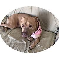 Adopt A Pet :: Alyza - Sudbury, MA