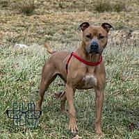 Adopt A Pet :: Brady - Centerburg, OH