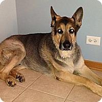 Adopt A Pet :: Max - Evergreen Park, IL