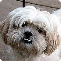 Adopt A Pet :: Bess - Oakley, CA
