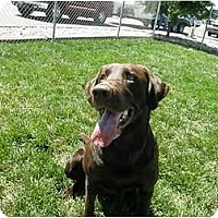 Adopt A Pet :: Duffie - Meridian, ID