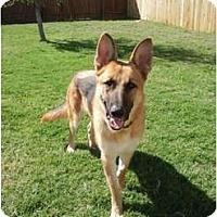 Adopt A Pet :: Perseus - Arlington, TX