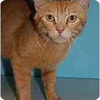 Adopt A Pet :: Tabitha - Marietta, GA