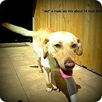 Adopt A Pet :: Jed - Gadsden, AL