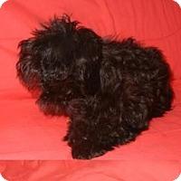 Adopt A Pet :: Maryann - Antioch, IL