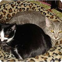 Adopt A Pet :: Maxine & Lilly - Chesapeake, VA