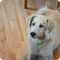 Adopt A Pet :: Marley - Saskatoon, SK