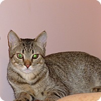 Adopt A Pet :: Jerry - Brooklyn, NY