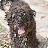Adopt A Pet :: Luce - Jupiter, FL