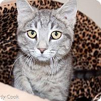 Adopt A Pet :: Leia - Ann Arbor, MI