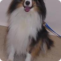Adopt A Pet :: Tissi - Gary, IN