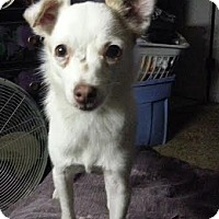 Adopt A Pet :: Rose - San Francisco, CA