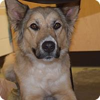 Adopt A Pet :: BRYNN - CHAMPAIGN, IL