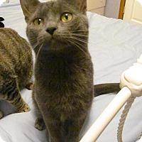 Adopt A Pet :: Parker - Covington, KY