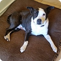 Adopt A Pet :: Rosie - Temecula, CA