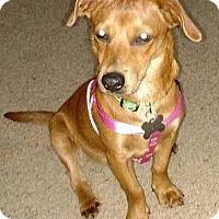Adopt A Pet :: Abby - Beavercreek, OH