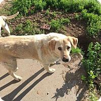 Adopt A Pet :: Lucky - Brooklyn Center, MN