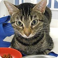 Adopt A Pet :: Ryuko - Topeka, KS