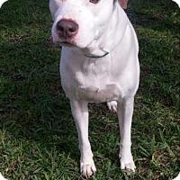 Adopt A Pet :: S/C Yhela - Miami, FL