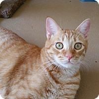 Adopt A Pet :: Jack - Chula Vista, CA