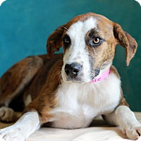 Adopt A Pet :: Claire - Waldorf, MD