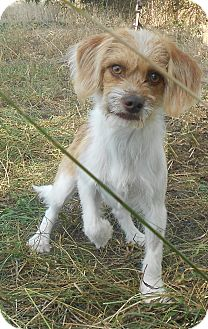 Terrier (Unknown Type, Small) Mix Dog for adoption in Huntsville, Alabama - Spencer