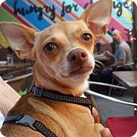 Adopt A Pet :: Allison - Allison Park, PA