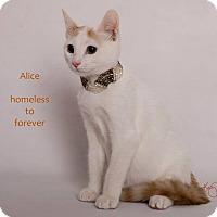Adopt A Pet :: Alice Cooper - Sherman Oaks, CA