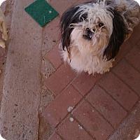 Adopt A Pet :: Chunkers - Phoenix, AZ